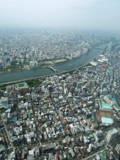 Ein Ameisenhaufen namens Tokyo