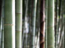 50 shades of green: Bambus