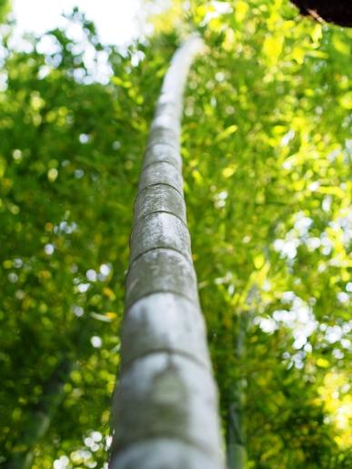 So frisch und leuchtend grün sieht Bambus im Frühling aus