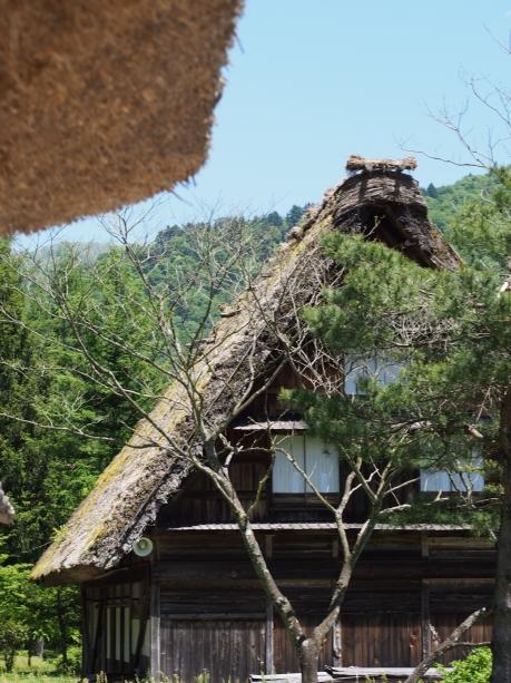 In den Reetdächern der alten Bauernhäuser leben viele Insekten